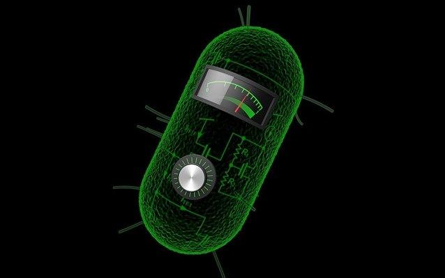 circuits_cells