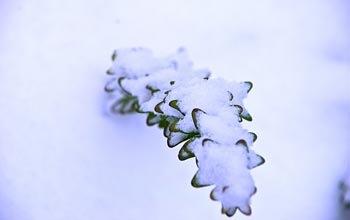 snowpl32