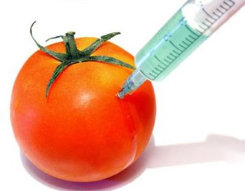 gm_tomato
