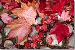 wb_leaves-correct